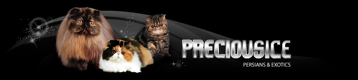 Preciousice Persians & Exotics